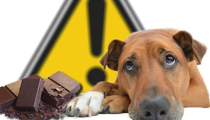 Le chocolat, toxique pour les chiens et les chats !