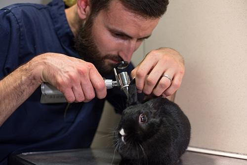 Veterinaire nac lyon Consultation lapin