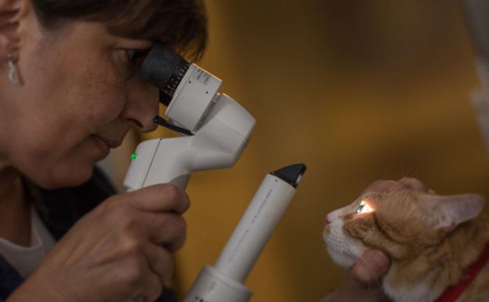 Ophtalmologie vétérinaire Lyon
