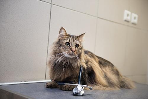 veterinaire lyon 8 eme Mermoz VetChat consultation